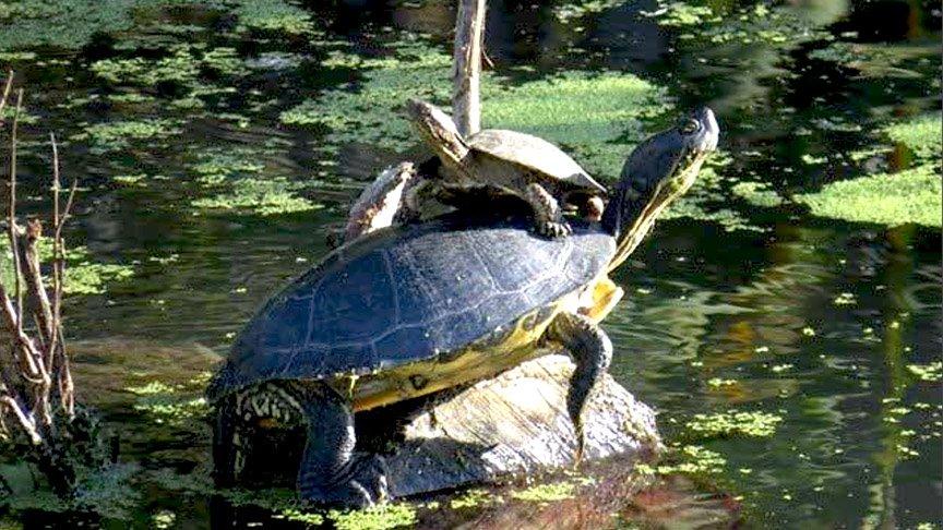 Napa Valley River Wildlife
