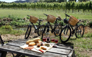 napa-valley-bike-tours
