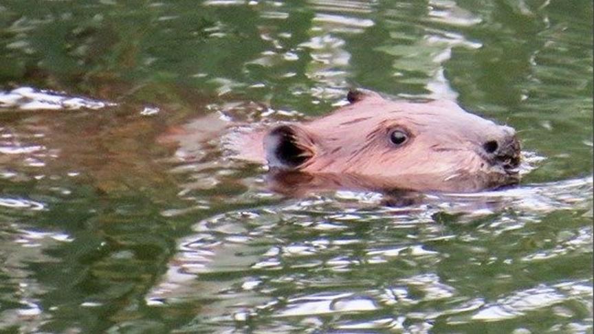 Wild Life In Napa River