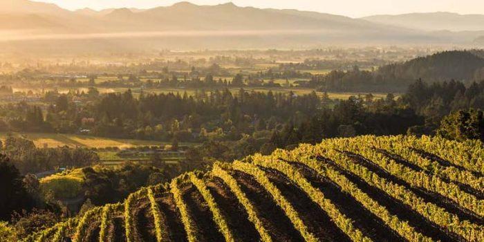 Best Napa Valley Wineries