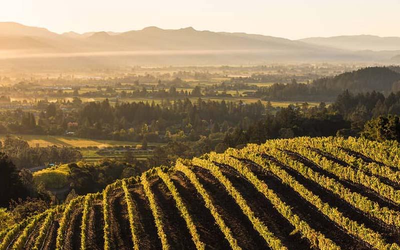 napa-valley-winery
