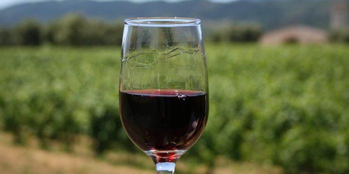 Napa Vs Sonoma Wines
